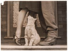 El adiós del soldado y el gato Bobbie, Sidney, 1939. Fotografía de Sam Hood