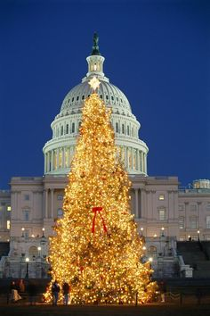 Christmas Tree standing before the Capitol http://imgsnpics.com/christmas-tree-standing-before-the-capitol/