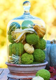 fall decor under glass...cloche