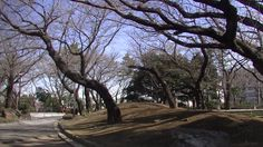 #japan#japon#travel#street#park