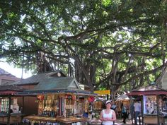 International Marketplace, Honolulu, Hawai'i