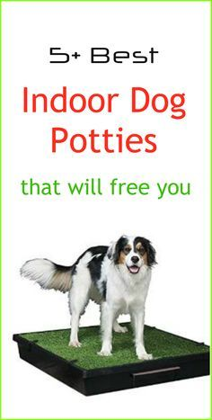 Indoor Dog Potties can be a great solution when taking the dog outside for a walk is not an easy option. Dog potties have come a long way in terms of features and there are lots of dog potty systems now available. Based on hours of research together with my own personal experiences, I think these pet toilets are  the best indoor dog potties available in the market today and the ones I recommend you try.... see more at PetsLady.com ... The FUN site for Animal Lovers
