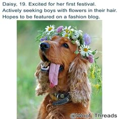 We're excited for you too Daisy! Go get them flower boys! Get 15% off and free shipping with code: COACHELLA at woofthreads.com  #dogsofcoachella  #dogbios #coachella #barkpost #woofthreads