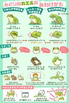 Favorite tweet by @tukunosuke : みどりのカエルのみわけかた#カエルの日 https://t.co/tgvGK2CQue