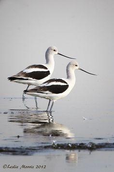 "Love Sandhill Crane 6/"" Car Vinyl Sticker Decal bird watcher lake pond heron *E4*"