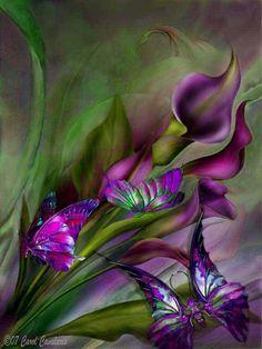 Purple CallaLilies