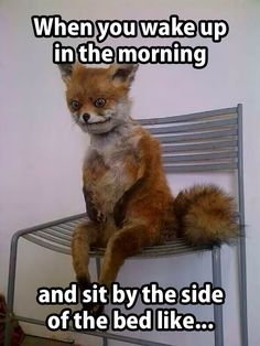 When you wake up in the morning...