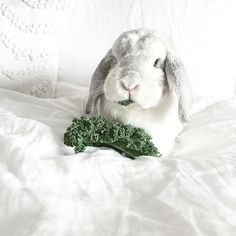 Raise your hand if you forgot to wear green today (😳🙋🏻). Eating your greens counts too though, right? Farm Animals, Cute Animals, Getting A Kitten, Holland Lop, Breakfast In Bed, White Bedding, Instagram Shop, Cute Bunny, West Elm