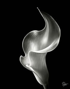 black and white flame - Google Search