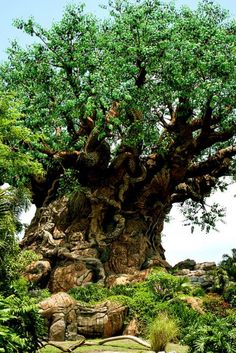 Ancient tree