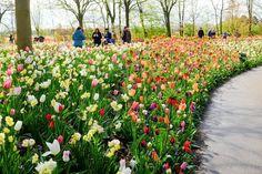 Guia de jardin. Blog de jardinería y plantas. Jardinería en casa.: jardín