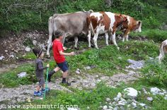 Visit Trentino, tra le Dolomiti per #albeinmalga http://www.sphimmstrip.com/2014/08/visit-trentino-vivere-esperienza-di-un-alba-in-malga.html