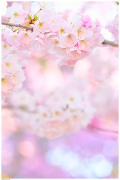 Dreamy pink light and blossom