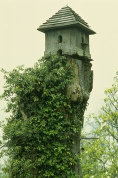1000 Images About Treestump Ideas And Birdhouses Feeders
