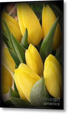 """#Tulips Metal Print featuring the photograph """"Golden Tulips"""" by Photographic Art and Design by Dora Sofia Caputo #spring #yellow"""