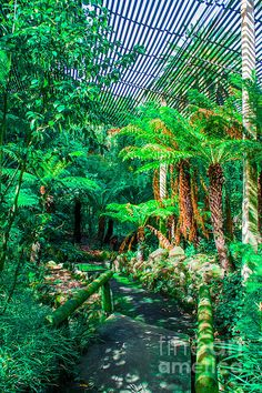 "Naomi Burgess' enchanting artistry, ""Miniature Rainforest in a Park."
