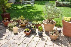 Une petite collection de succulentes et de plantes méditerranéennes est cultivée en pots (c) Agnès Guillaumin Denis Pépin, lauréat du concours Jardiner Autrement 2012