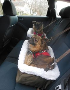9 Things to Pack for a Road Trip With Your Dog  These dog Autumn and Rocket, ready to road trip!
