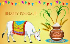 Pongal Festival is most important festival for people belonging to Tamil Nadu region. Pongal is a four days festival celebrated in Tamil Nadu State: Bhogi Festival: January Surya Pongal: January Mattu Pongal: January Kaanum Pongal: January 2011 Wishes Messages, Wishes Images, Sankranthi Wishes, Happy Makar Sankranti Images, Pongal Images, Hd Wallpaper Quotes, Car Wallpapers, 2017 Pics, Happy Pongal