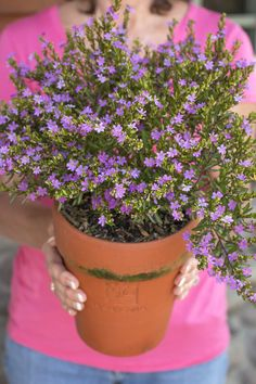 Mexican Heather - Monrovia - Mexican Heather