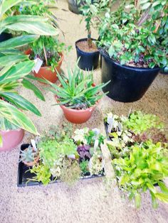 Plants for sale   #verticalgarden #green #sustainable  Stamford, CT    www.greenupgroup.com