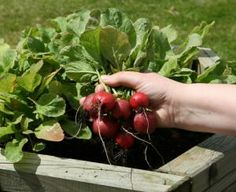 Extensive list of plant options for spring, summer, fall veggies and plants for zone 6