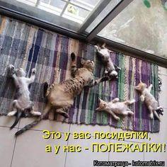 Вашему вниманию последняя свежая котоматрица осени. Обсуждение на LiveInternet - Российский Сервис Онлайн-Дневников
