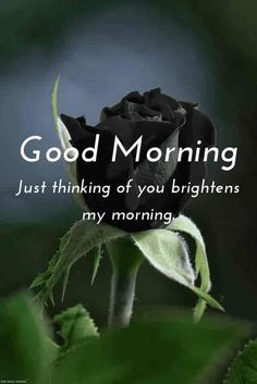 Good morning romantic msg for her with hd black rose. Good Afternoon My Love, Good Morning Romantic, Good Morning Nature, Good Morning Love Messages, Good Morning Dear Friend, Latest Good Morning, Morning Love Quotes, Good Afternoon Quotes, Morning Humor