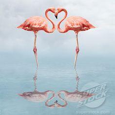 #flamingo #pink #birds #birdy #love #bird #blackbird #birdy #birdies #vogel #vogeltje #vogeltjes #liefde #merel #mereltjes #prints #quotes #gadgets #foto #vogels #stuff #pictures #illustration #illustratie #art #kunst #accessories #accessoires