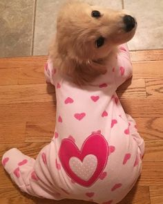 Things we all adore about the Intelligent Golden Retriever Puppies - Treue Seele - Perros Cute Little Puppies, Cute Dogs And Puppies, Baby Dogs, I Love Dogs, Cute Babies, Doggies, Baby Puppies, Funny Puppies, Puppies Puppies