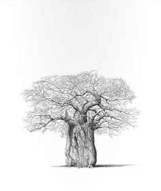 Fine Art Portfolio represents established (since South African Art Galleries & Artists Tree Drawings Pencil, African Tree, African Artwork, Safari, Baobab Tree, South African Artists, Art Portfolio, Tree Art, Botanical Prints