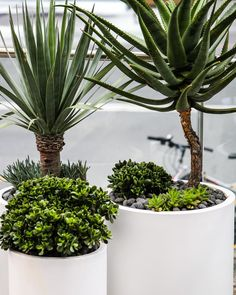 Advice, tricks, along with overview when it comes to getting the finest result and also ensuring the maximum use of Backyard Porch Ideas Balcony Garden, Garden Pots, Landscape Design, Garden Design, Martin Brothers, What Is Design, New Farm, Modern Planters, Easy Garden