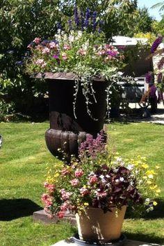 Le coudray macouard petite cite de caractere maine et loire jardinerie du coudray