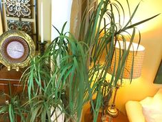 DIY - Make Your Own Tree House Plant