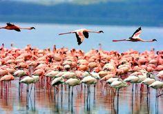 sansibar afrika reisebericht pinke flamingos in ihrem natürlichen zustand vögel vogelart weiß pink tiere afrika