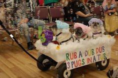 Rub a dub dub  three pugs in a tub