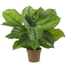 Found it at Wayfair - Philodendron Silk Plant (Real Touch)