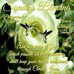 Good Sunday Morning, Sunday Love, Have A Blessed Sunday, Wednesday Morning, Blessed Week, Morning Pics, Morning Board, Happy Wednesday, Happy Sunday Quotes