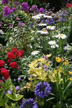 Lower garden perennials July 30th.  English garden for all seasons. Wonderful combination of colours! So pretty!!