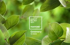 """""""Greenery"""" is named Pantone colour of the year 2017."""