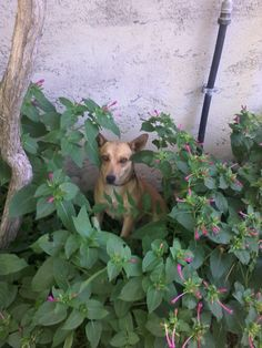 Pablo  www.borgosanmartino.eu Dogs, Plants, Self, Planters, Pet Dogs, Dog, Plant, Planting, Doggies