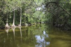 1000 Images About Mount Dora On Pinterest Florida