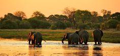 Botswana-Elephants.jpg (900×421)