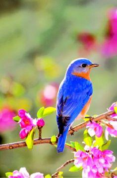 hermosos colores