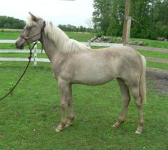 Unusual color, but GORGEOUS mare! - Page 4