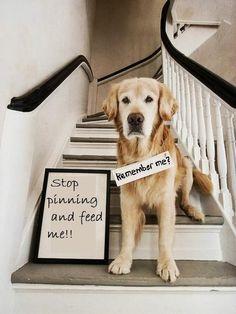 Dog humor...