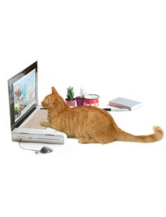 This laptop shaped scratching pad is perfect for that kitty in your life who loves to walk all over your laptop keyboard and use the screen to scratch its back