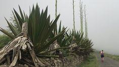 Anta, Cactus Plants, Cacti, Cactus