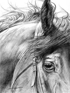 Horse Portrait Original Drawing by DLysons on Etsy