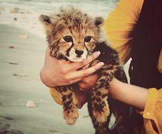 I want him so much! So cute <3